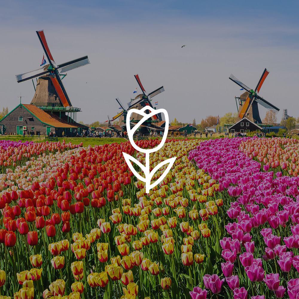 Nederlandstalige artiest